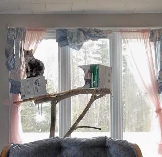Winston - King of the Cat Tree