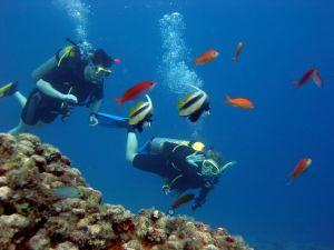 mergulho em recife com peixinhos coloridos