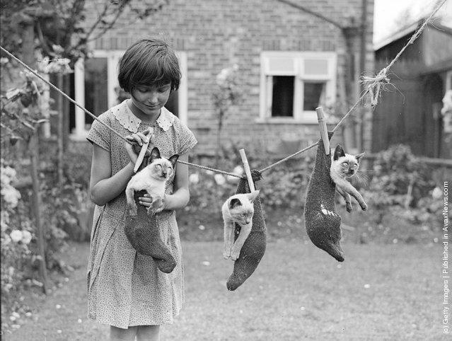 Маленькая девочка вешает носки, в которых сидят сиамские. (Кройдон, Лондон,1931 г.)