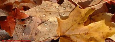 Couverture facebook feuilles d'automne 6