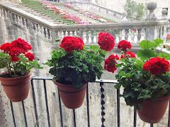 Tiempo de Flores en Girona
