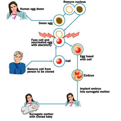 Proses Klining dan Proses Kloning pada Hewan dan Manusia