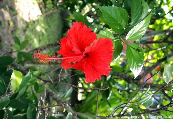 Flower - Ko Phi Phi, Thailand