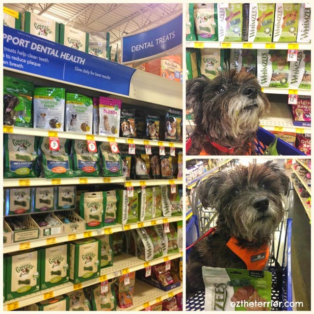 Oz the Terrier shopping for dental treats at his local PetSmart for Pet Dental Health Month