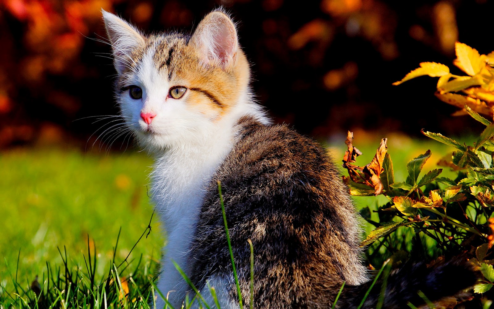 Fantastic Wallpaper High Quality Cat - Cute+kittle+near+neem+leaves+HD+wallpaper  Picture_995661.jpg