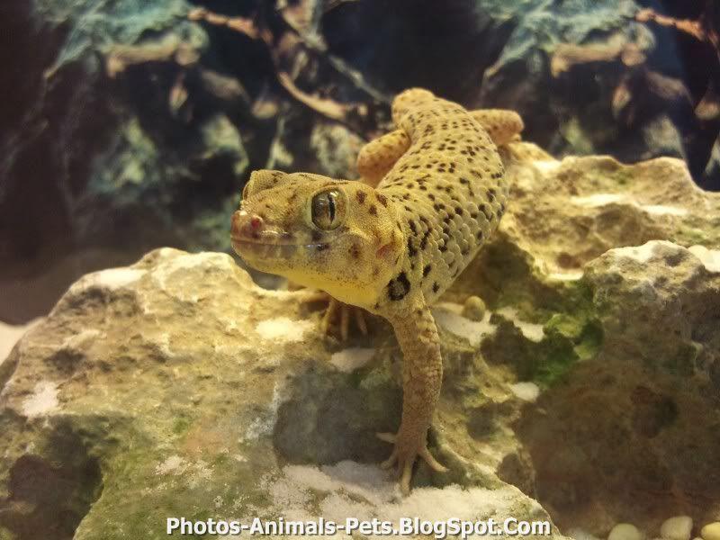 http://4.bp.blogspot.com/-6V-hLG1wA5A/TxWPKy3l1wI/AAAAAAAAC60/gXMlxCq8qrg/s1600/gecko.jpg
