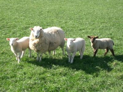 CLub de pastoreo en Guadarrama (Madrid)