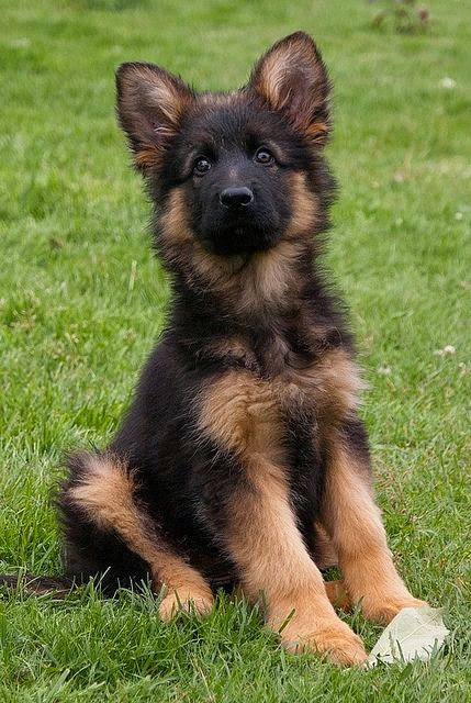 Top 5 Dogs that are easiest to train