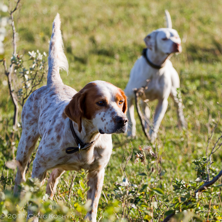 https://cdog.exposure.co/prairie-dogs