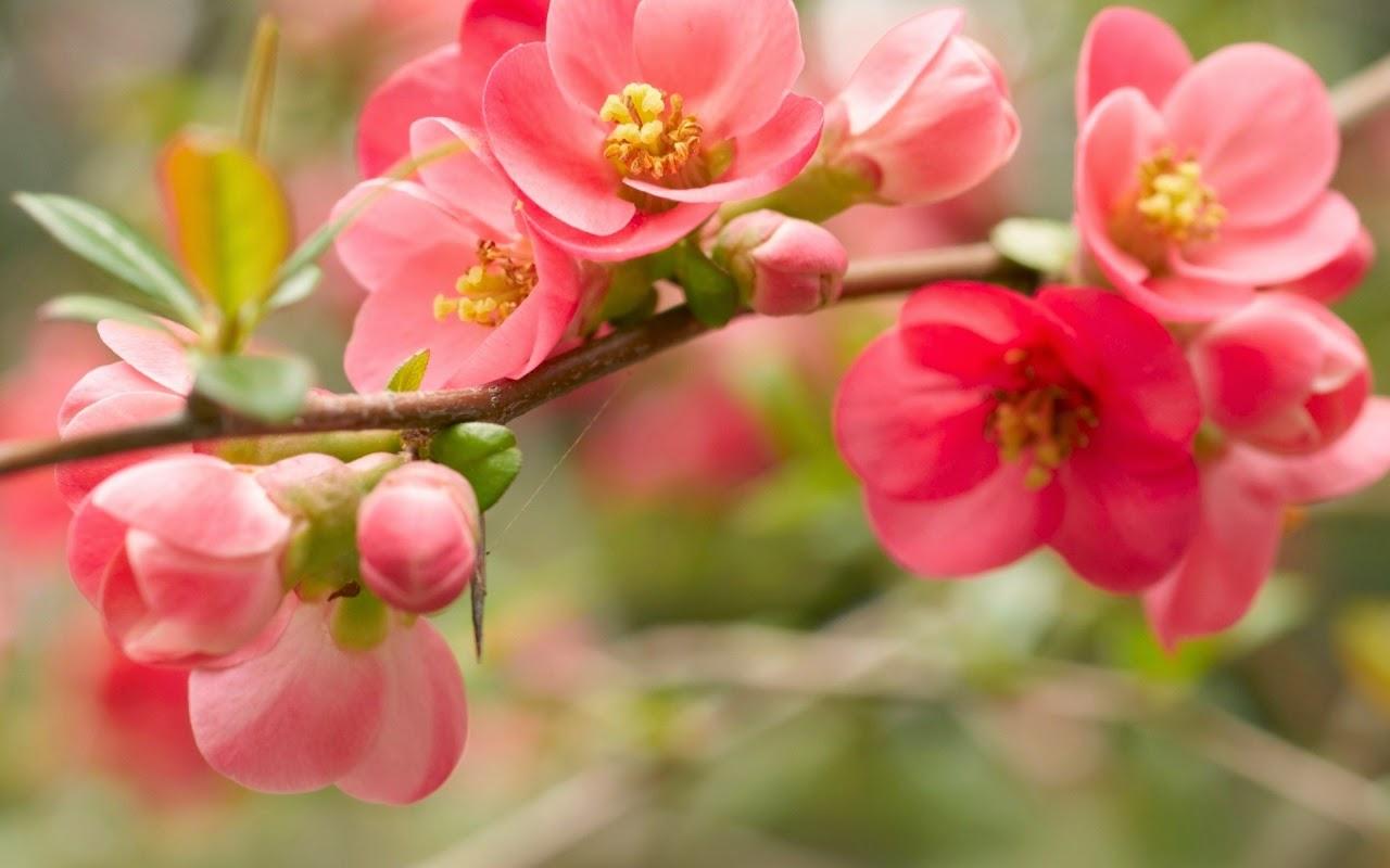 Flower Tumblr Structure Flower