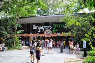 kebung binatang singapura, Singapore Zoological Gardens, Mandai Zoo, wisata di singapore