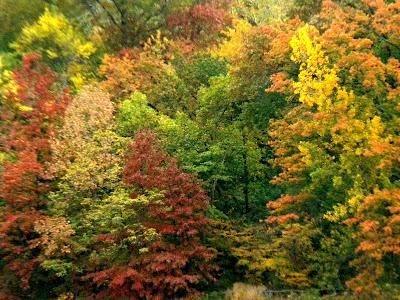 Autumn and Fall Colors Photo