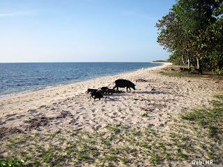 Praia Cuba Devaneios de Biela