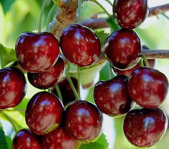 Buah Sweet Cherry (Google)