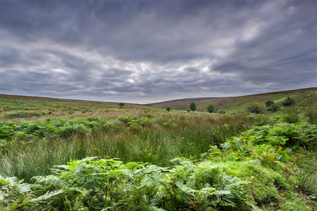 Soft light bathes the lush green landscape in Exmoor National Park by Martyn Ferry Photography