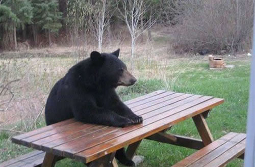 bears+waiting+patiently.jpg