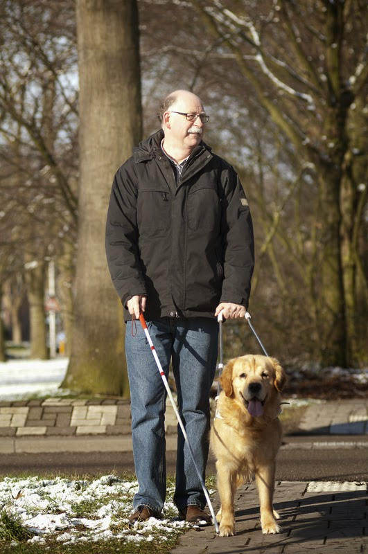 Guide dogs/seeing eye dogs are one type of working dog