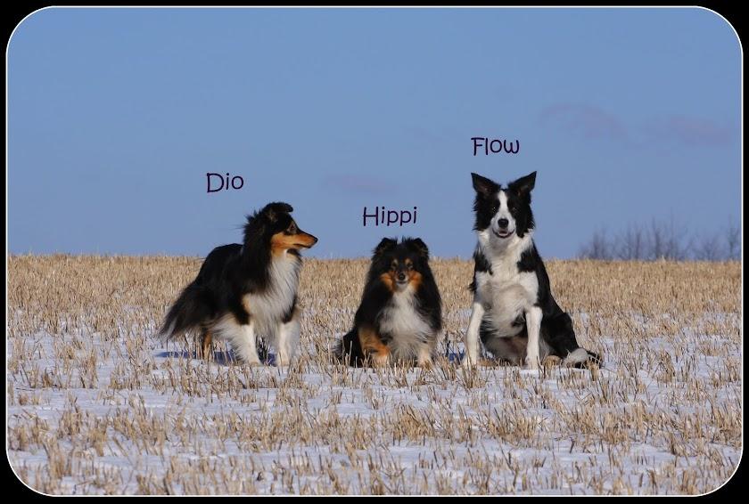 Hippi, Flow & Dio