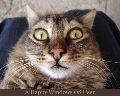 Cat staring like Windows Happy User: Intelligent Computing