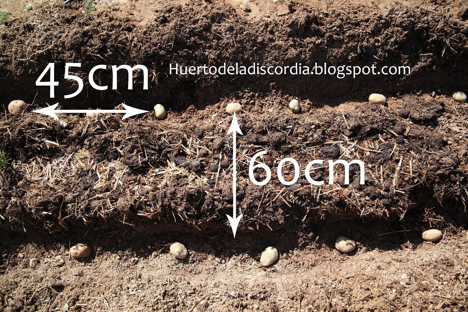 El huerto de la discordia plantando patatas for Como cultivar patatas