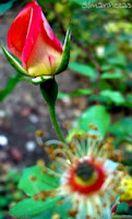 jardín de santa catalina - álava-