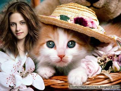 fotomontaje gatito con sombrero