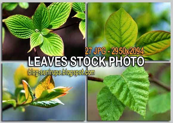 Stock Photo Gambar daun High Resolution