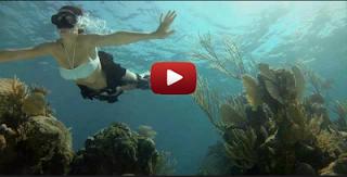 GoPRo : plongee sous marine avec les requins