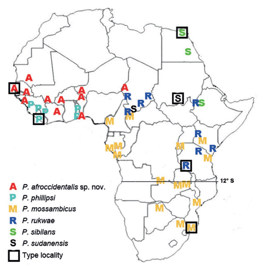 """Geographic distribution of the sequenced specimens of P. sibilans and other species frequently confounded with P. sibilans: P. phillipsi, P. mossambicus, P. rukwae, P. sudanensis, and P. afroccidentalis sp. nov. One symbol may correspond to several specimens from neighbouring localities. Location of type locality is approximate for P. sibilans (""""Egypt""""), P. phillipsi (""""Liberia"""") and P. mossambicus (""""insel Mossambique"""")."""
