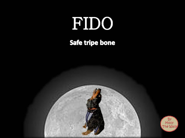 Safe Trip Home Dido album cover by Molly The Wally!