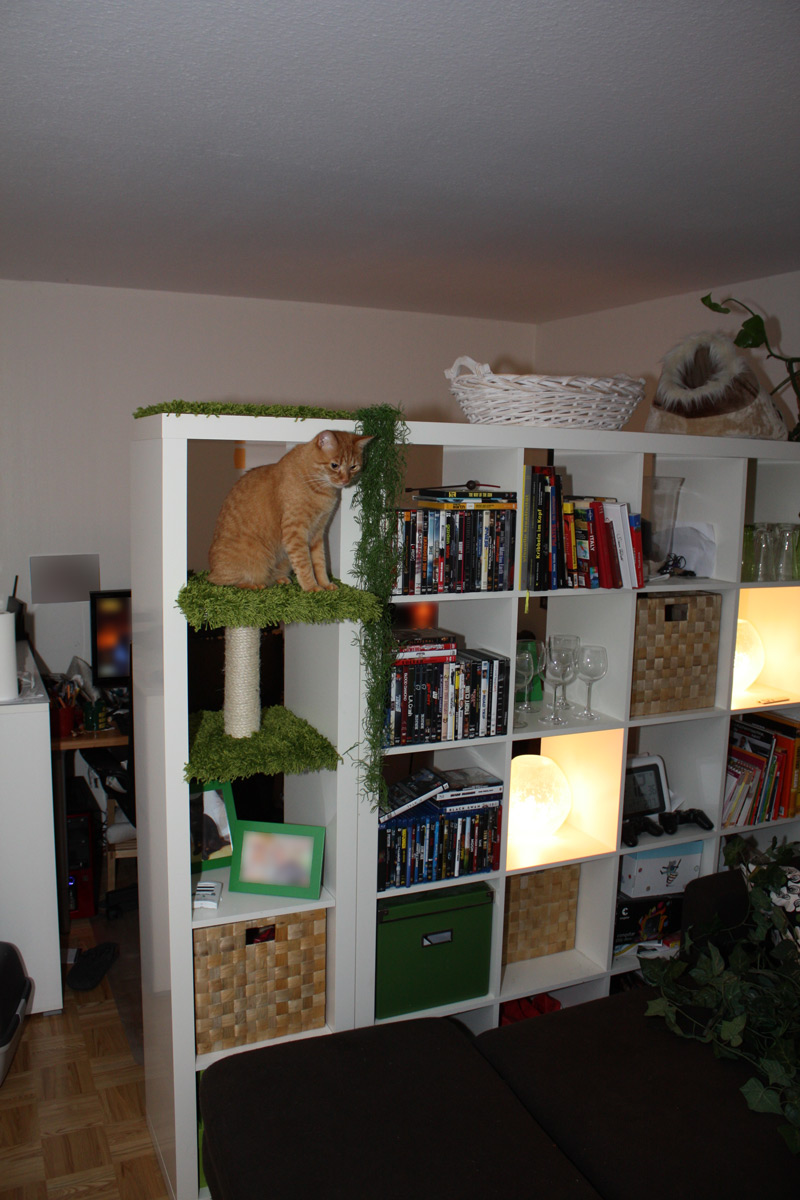 Cat EXPEDITion Get Home Decorating