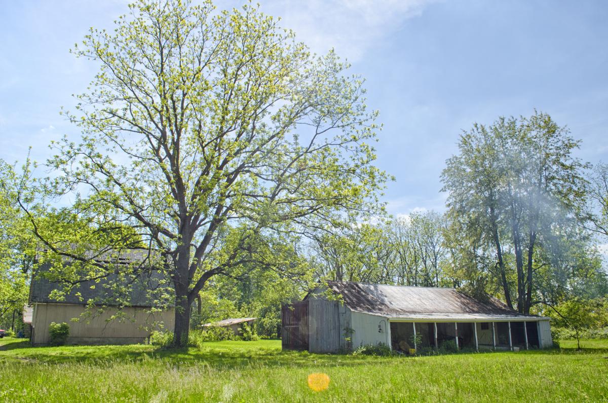 backyard barn photo