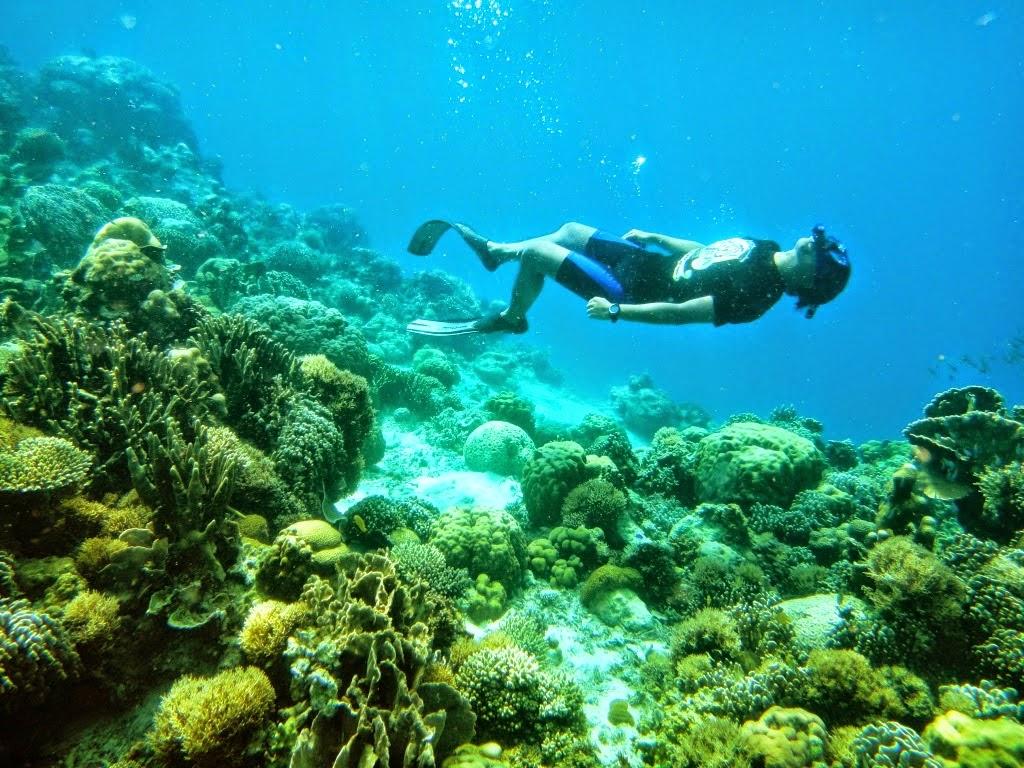 Kegiatan Diving Di Pulau Cangke