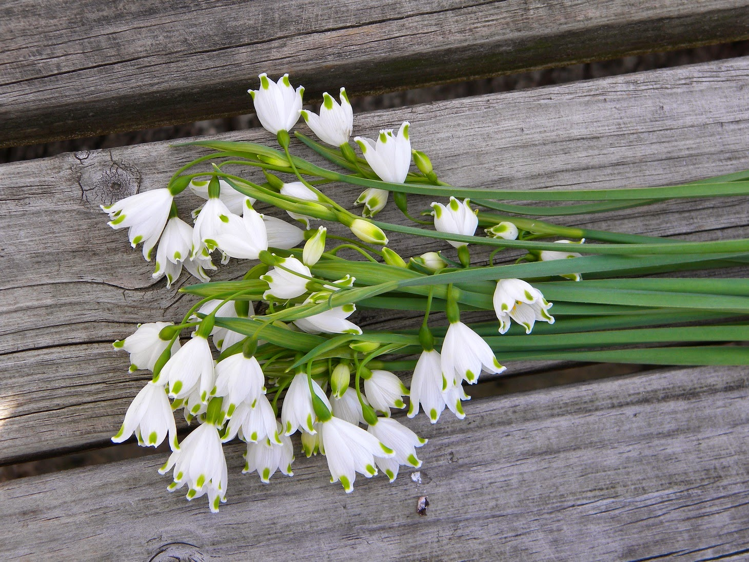 Leucojum A Dainty Flower For Early Spring Wedding Bouquets Winter