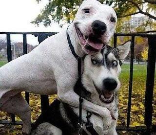 Humor Imagenes Mascotas Animales Funny Pet