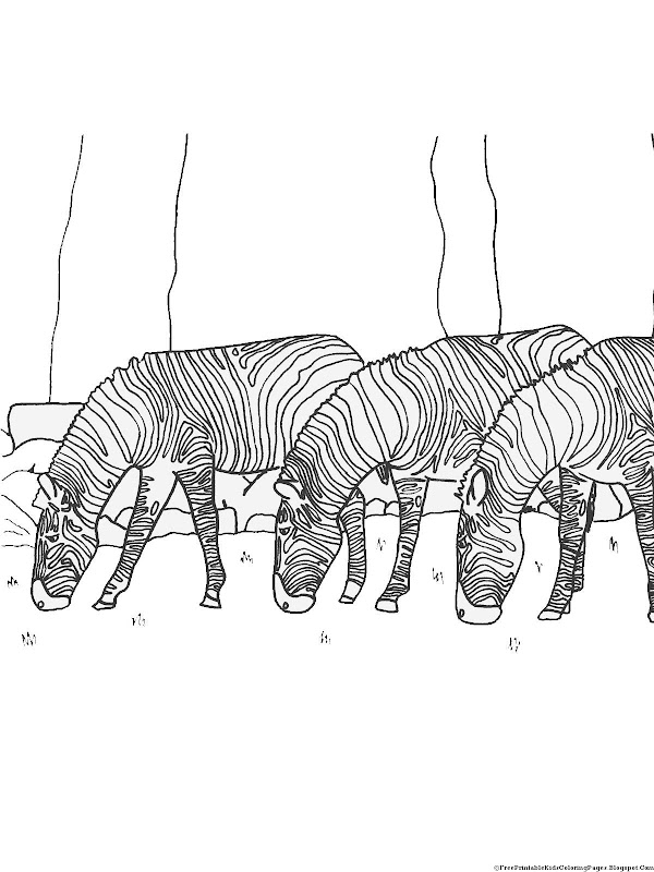 Zebra Coloring Pages title=