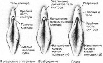 chem-mozhno-massirovat-klitor
