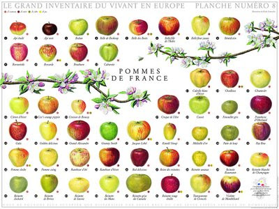 Types Of Apples In Season Now