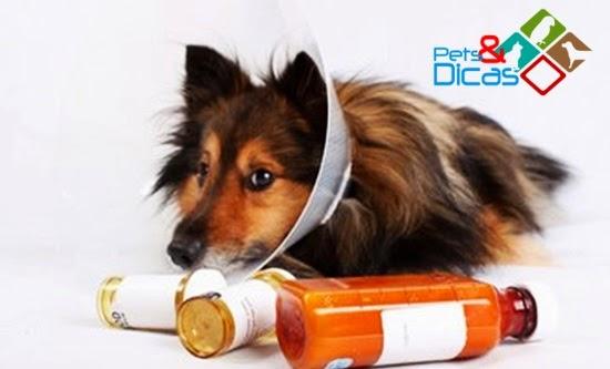 Como cuidar de um cachorro após a  cirurgia