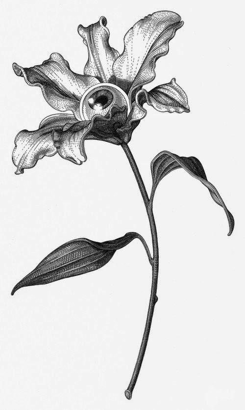Olivia Knapp ilustrações preto e branco surreais lisérgicas partes de corpos