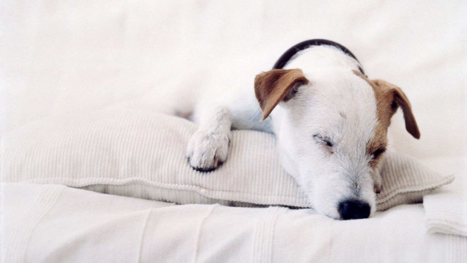 http://4.bp.blogspot.com/-6_EvtZogYXE/T3ShCABHg_I/AAAAAAAABBw/vCph-W09X5w/s1600/Cute+Dog+in+Bed+HD+wallpaper.jpg