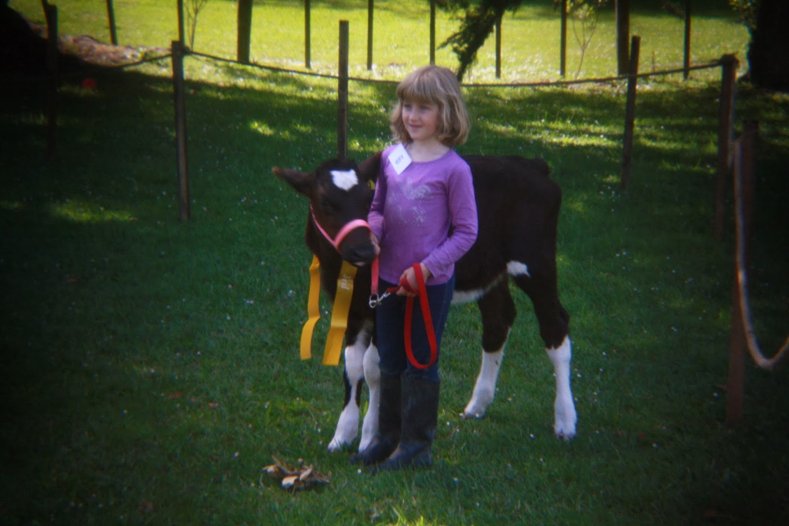 A little girl with an award winning calf.