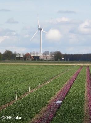 wind turbine, the Netherlands