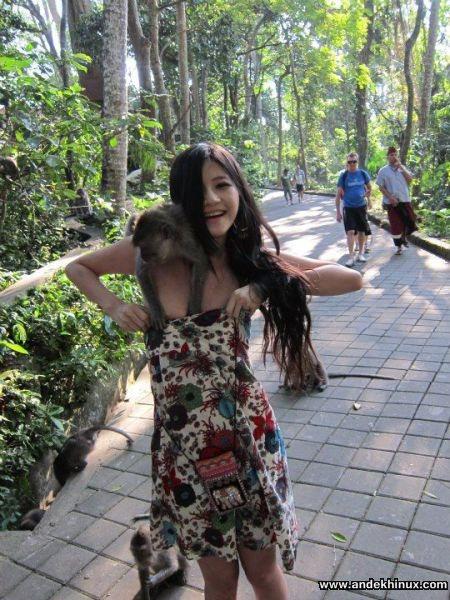Edan, Monyet - Monyet Ini Nafsu Dengan Payudara Perempuan!