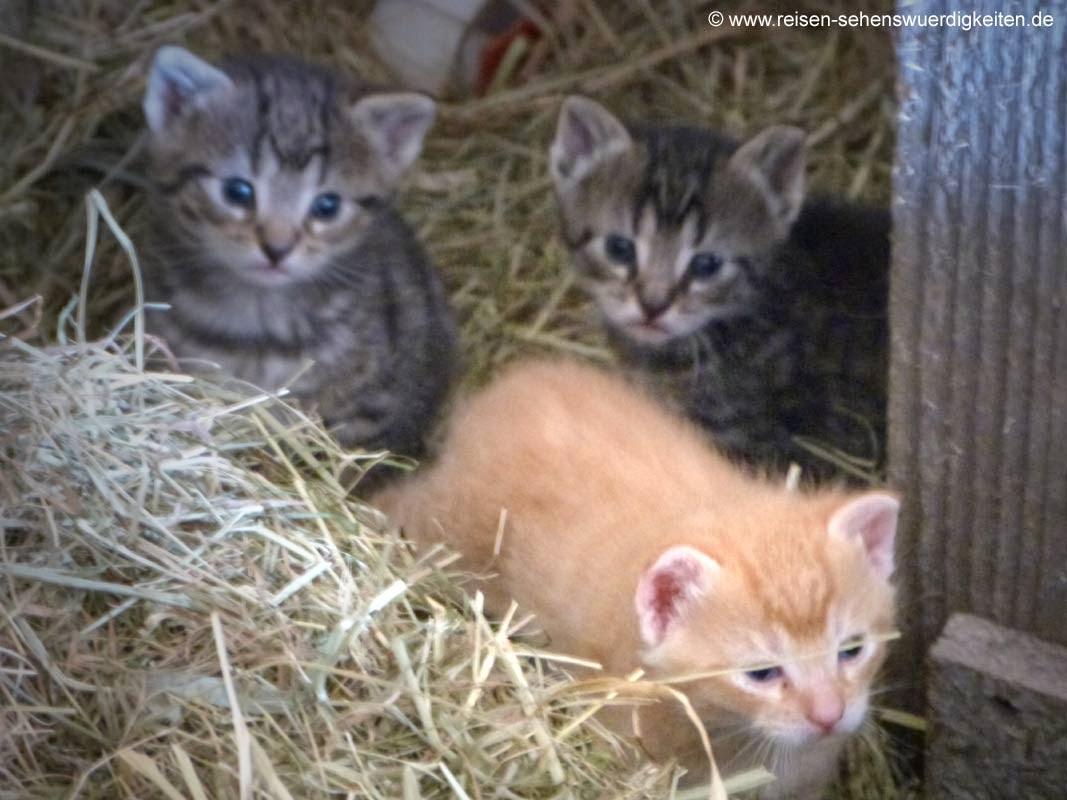Katzenbabys, Katzenkinder, kleine Katzen