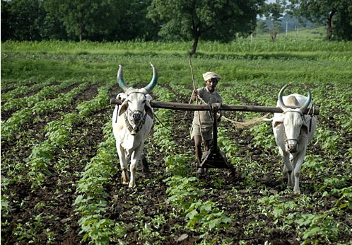 indian agriculture some facts