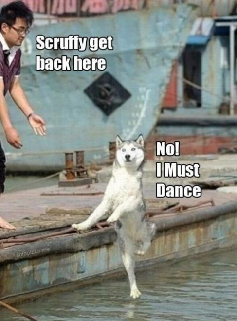 Funny Meme No Caption : Dog meme collection funny joke pictures