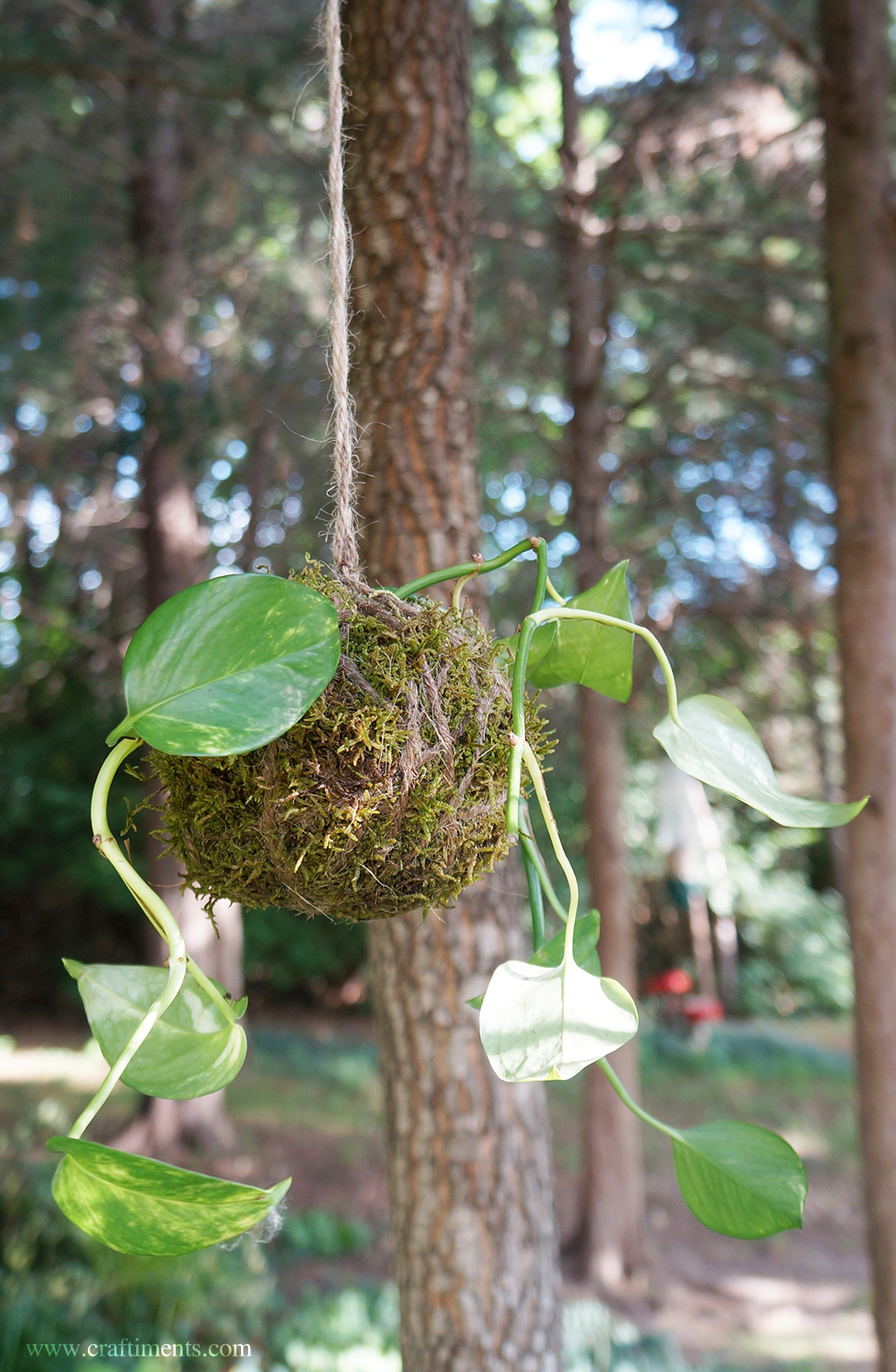 Craftiments:  Pothos plant kokedama hanging outdoors