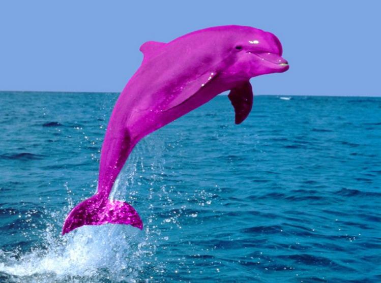 Dark Pink Dolphin title=
