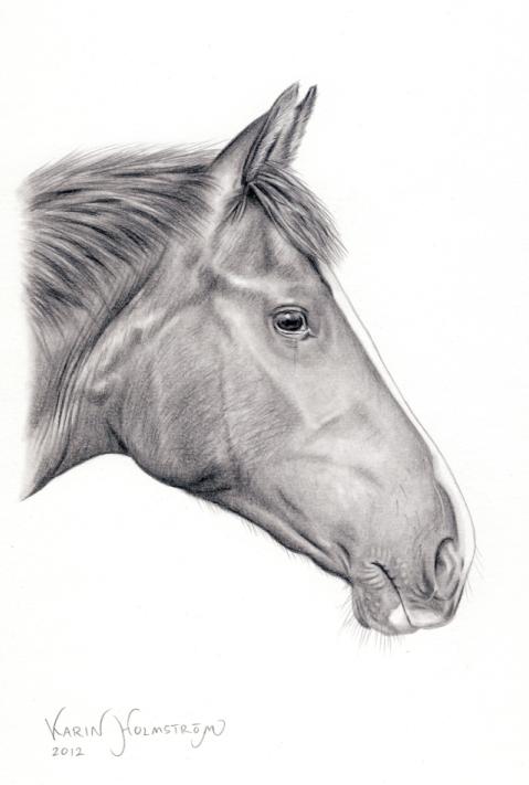 Hästporträtt i blyerts